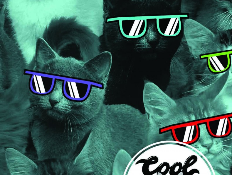 New Cool Cats branding for DQ